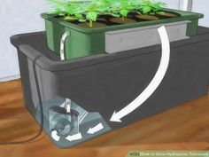 hydroponics 101 a simple guide